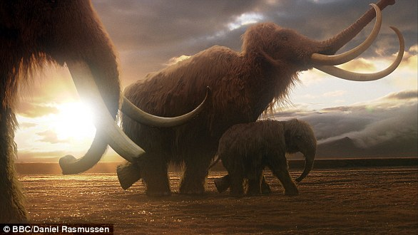 Mammoths were victims of increased hunting due to climate warming, habitat shrinkage and early population growth, and were endangered along with many large animals.